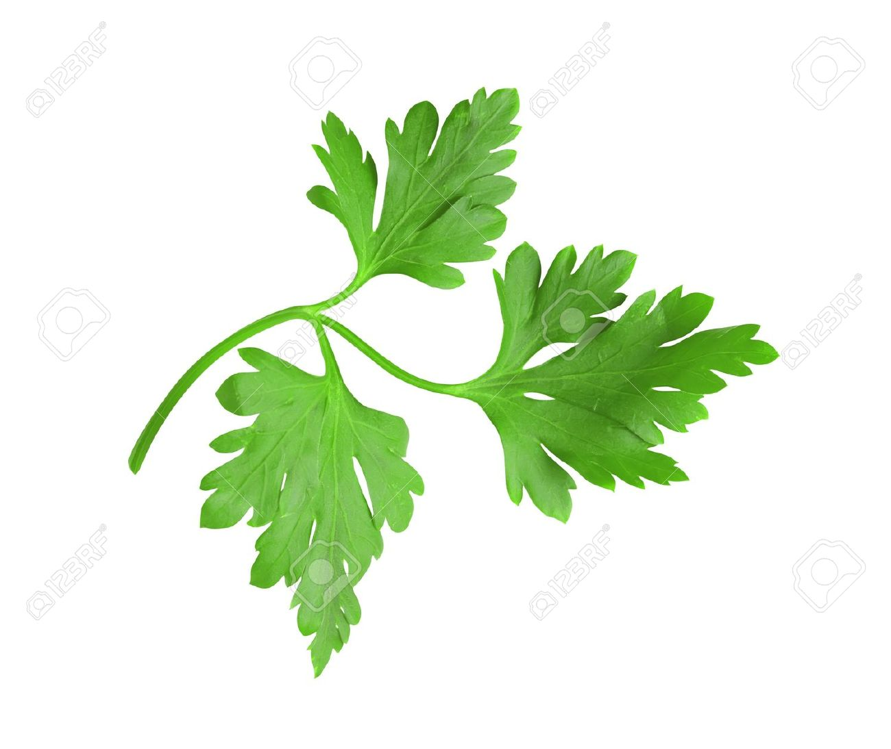 Fresh Green Herbs (leaf) Parsley Isolated On White Background.