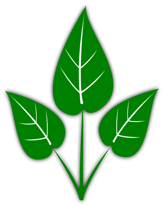 Images Of Leaves.