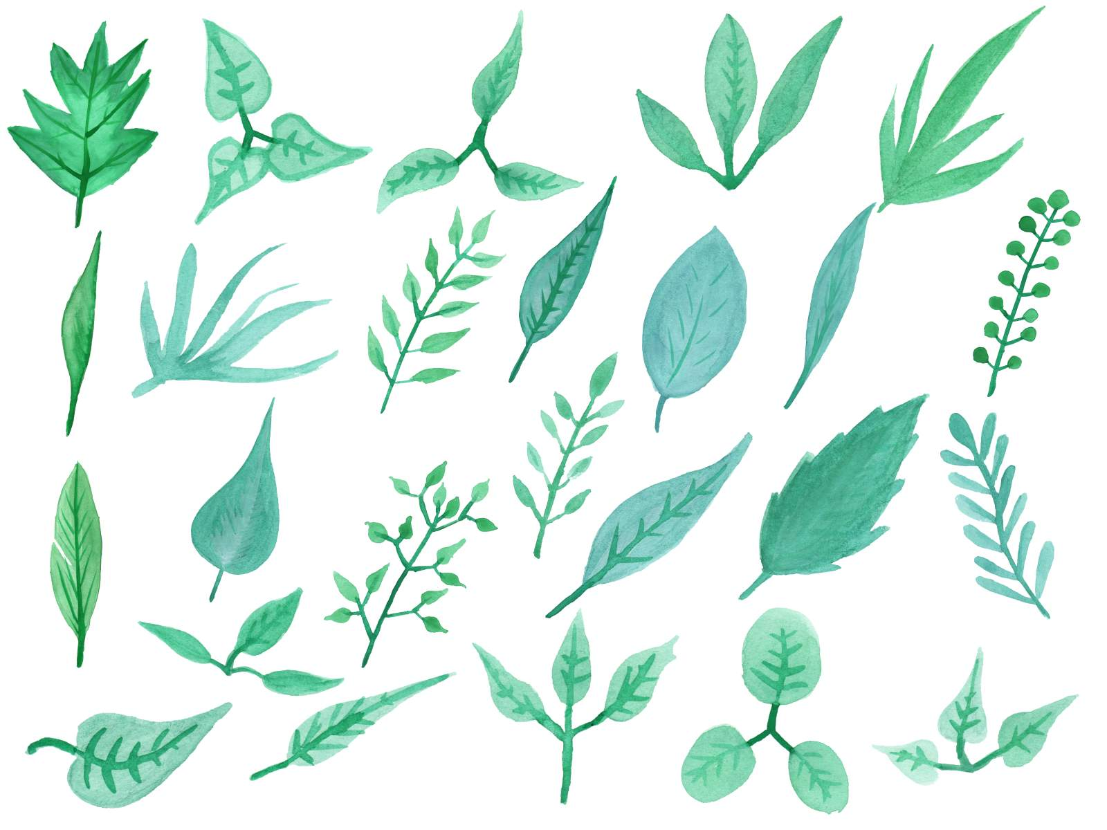 25 Watercolor Leaf (PNG Transparent) Vol. 3.