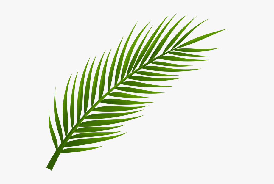 Palm Tree Clip Art, Palm Tree Drawing, Leaf Drawing,.