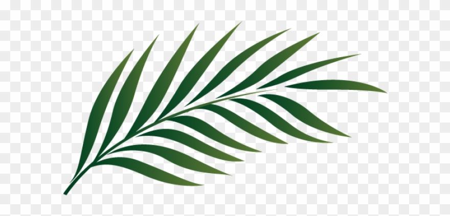 Png Palm Leaf.