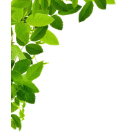 Download Leaves Free PNG photo images and clipart.