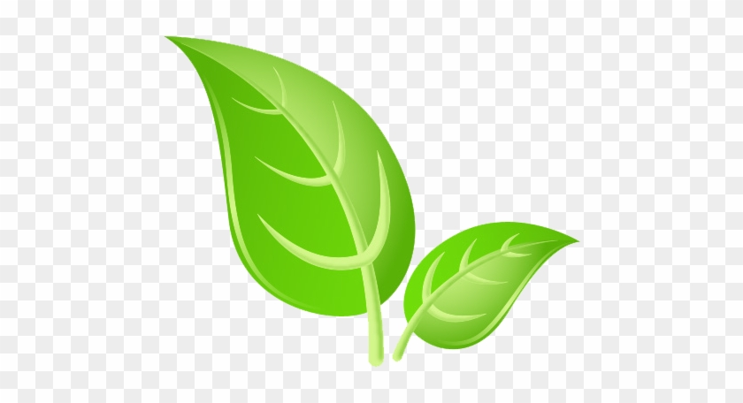 Green Leaves Png Hd Images.