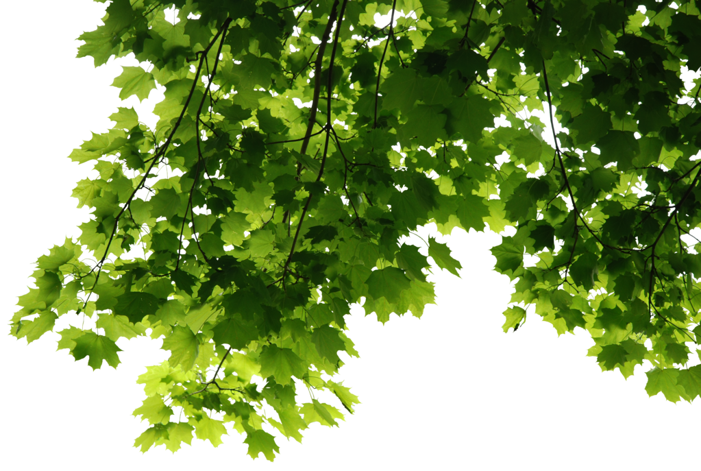 Leaves PNG Transparent Images.