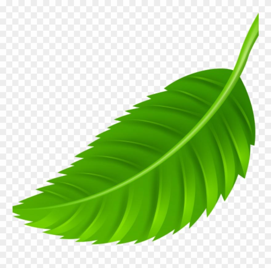 Leaf Images Clip Art Leaf Png Clip Art Best Web Clipart.