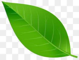 Download Free png Leaf PNG & Leaf Transparent Clipart Free.