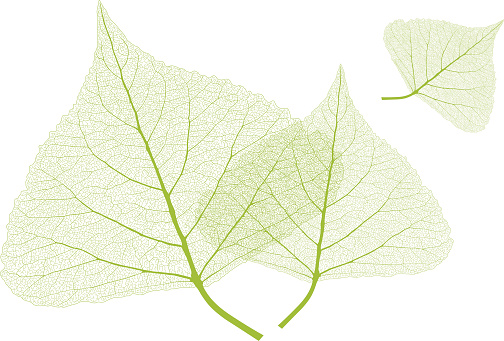 Close Up Leaf Drawings Clip Art, Vector Images & Illustrations.