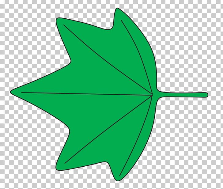 Leaf Shape 葉縁 Plant Identification Wikipedia PNG, Clipart.