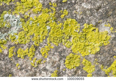 Lichen Rock Stock Photos, Royalty.