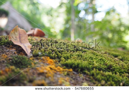 """mossy Carpet"" Stock Photos, Royalty."