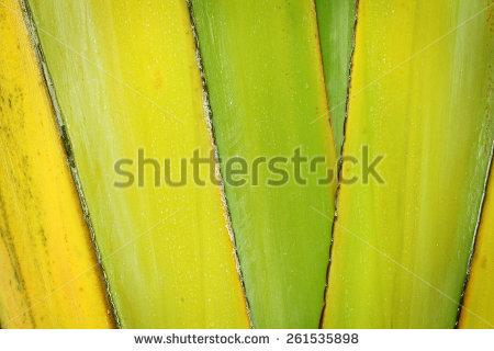 Leaf Sheaths Stock Photos, Royalty.