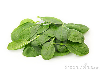 Baby Spinach Royalty Free Stock Images.