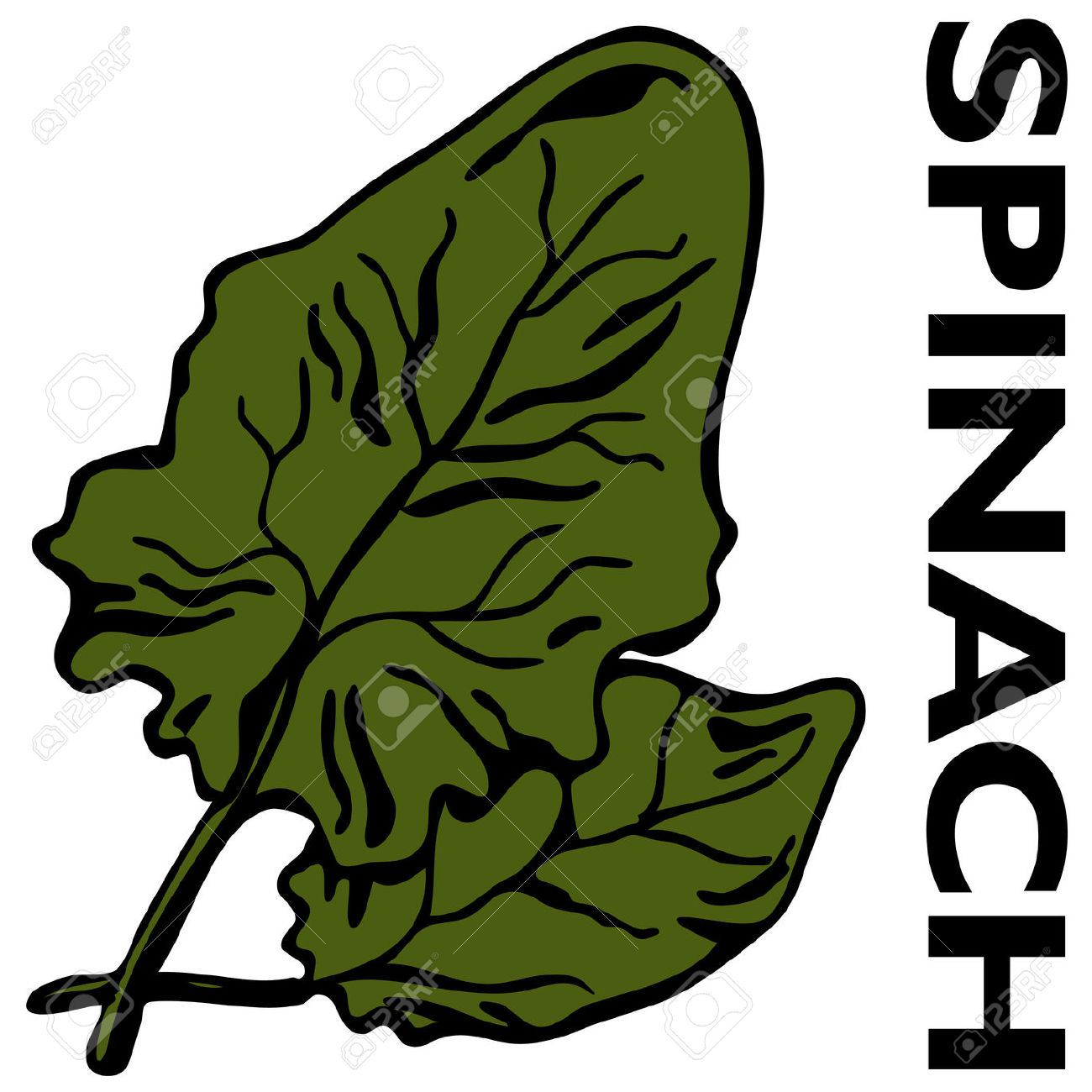 Spinach leaf clipart.