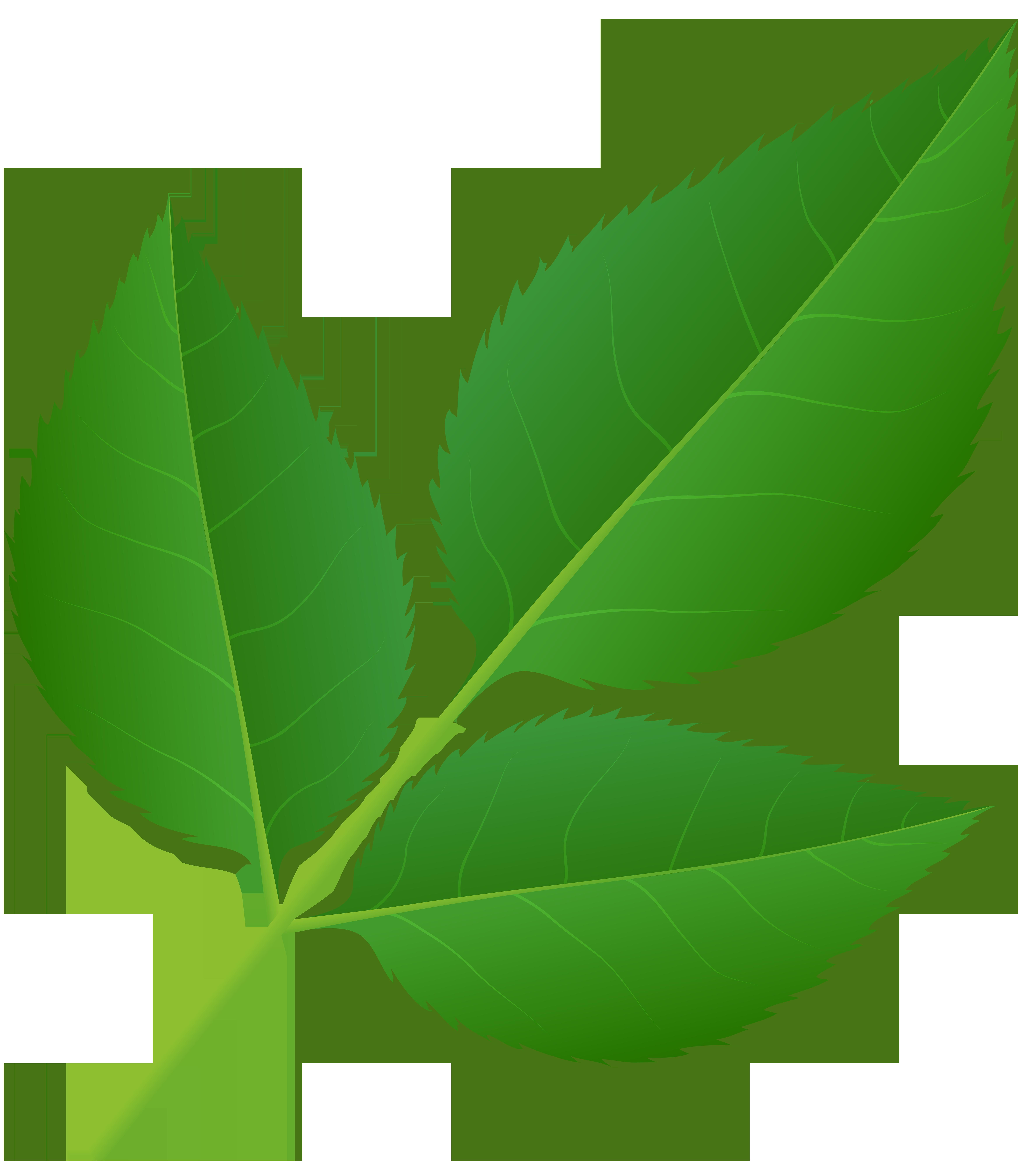 Leaves of Rose Stem Transparent PNG Clip Art Image.