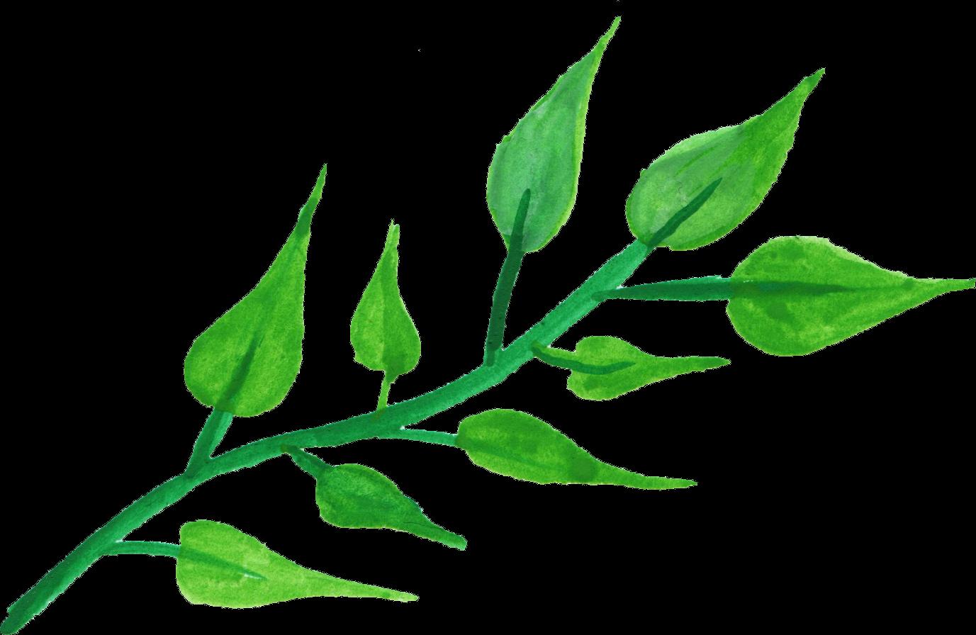 Leaf Plant stem Watercolor painting Clip art.