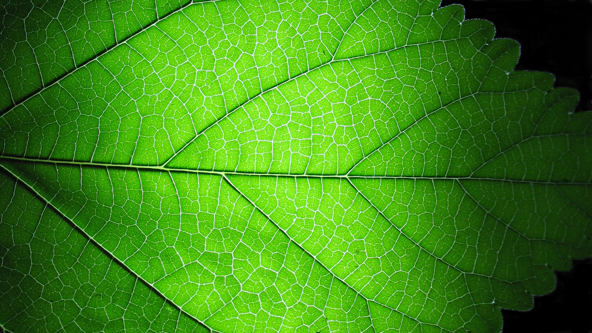 Leaf Structures Clipart 20 Free Cliparts