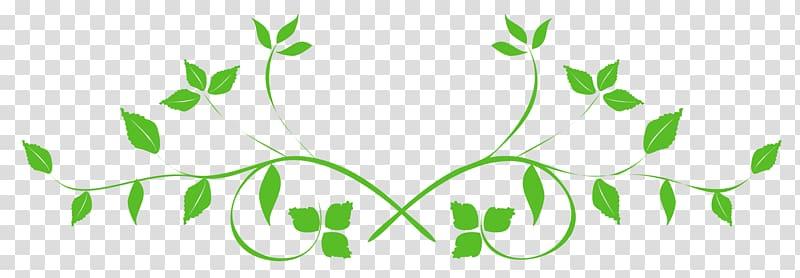 Green plant , Leaf , Leaves Swirl transparent background PNG.
