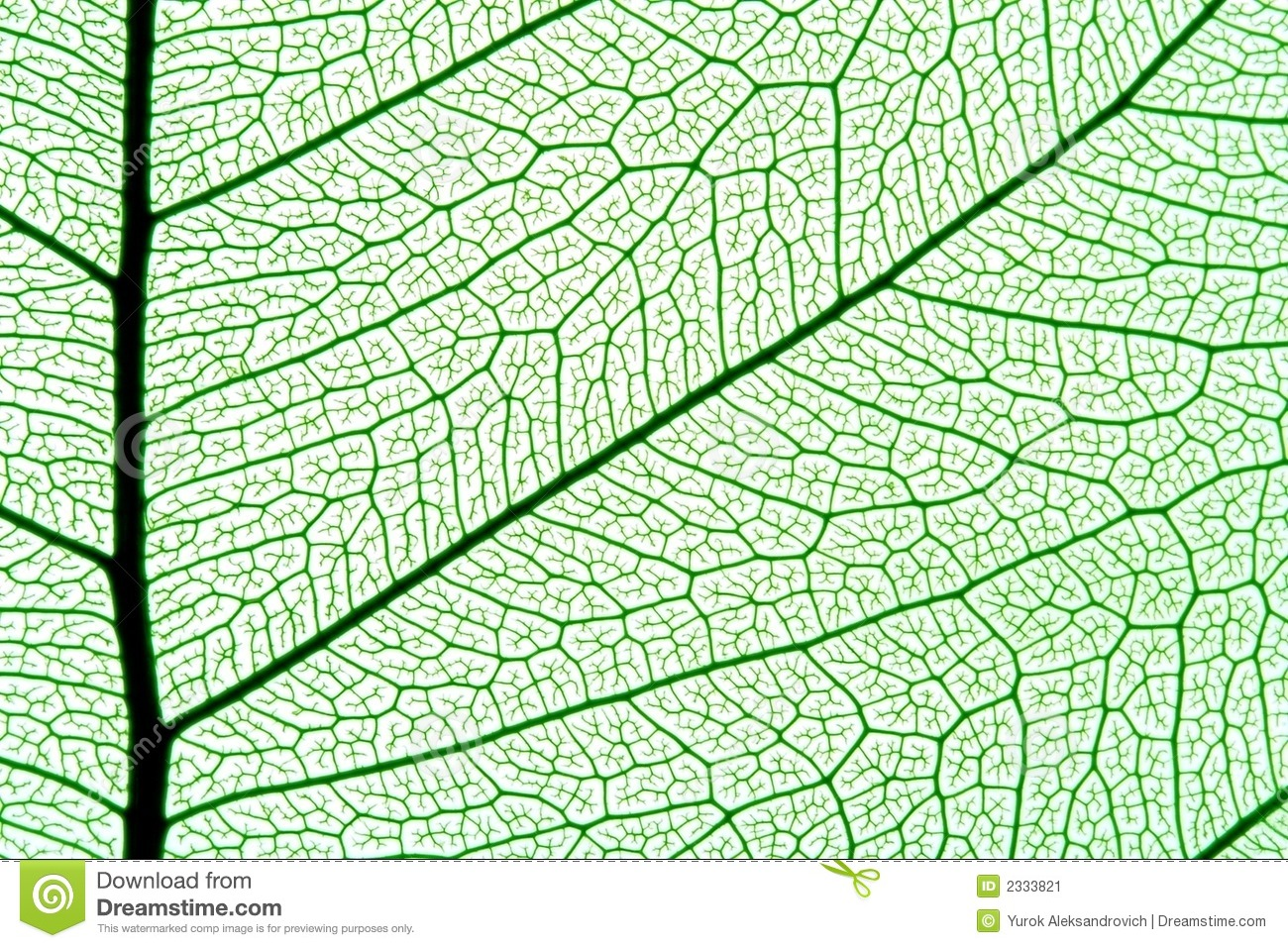 Vector leaf veins seamless texture.