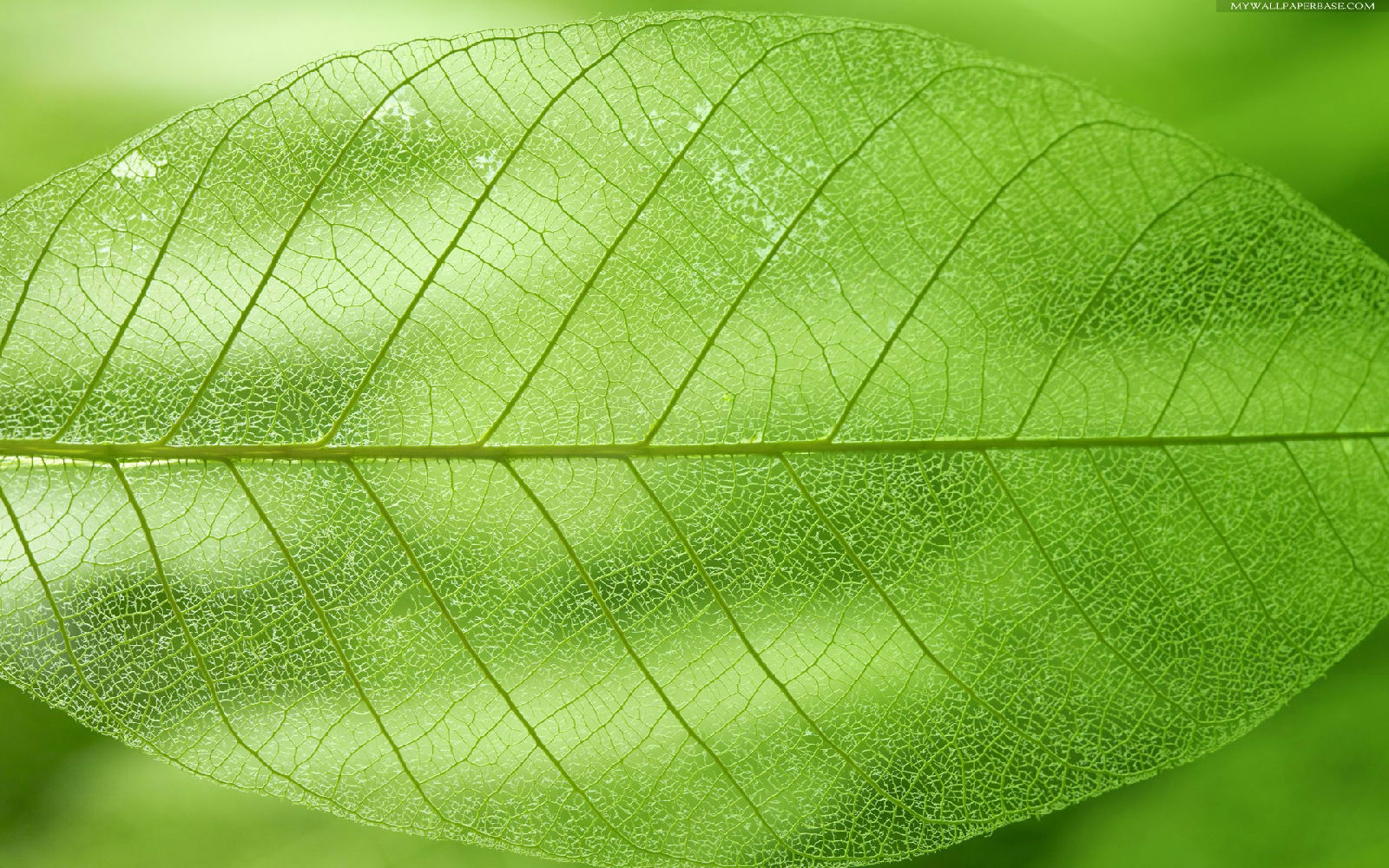 Leaf texture clipart 20 free Cliparts | Download images on Clipground 2020