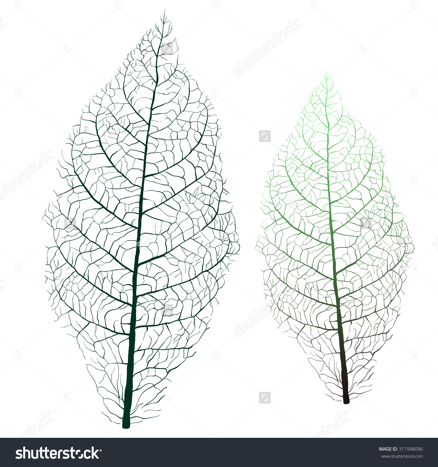 Tobacco Leaf Veins Stock Vector 311948096.