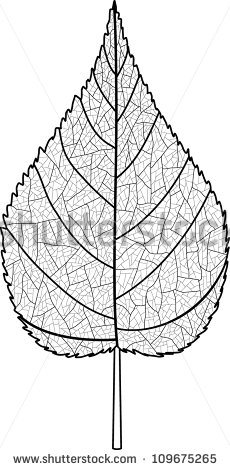 Leaf With Veins Line Art Stock Vector Illustration 109675265.
