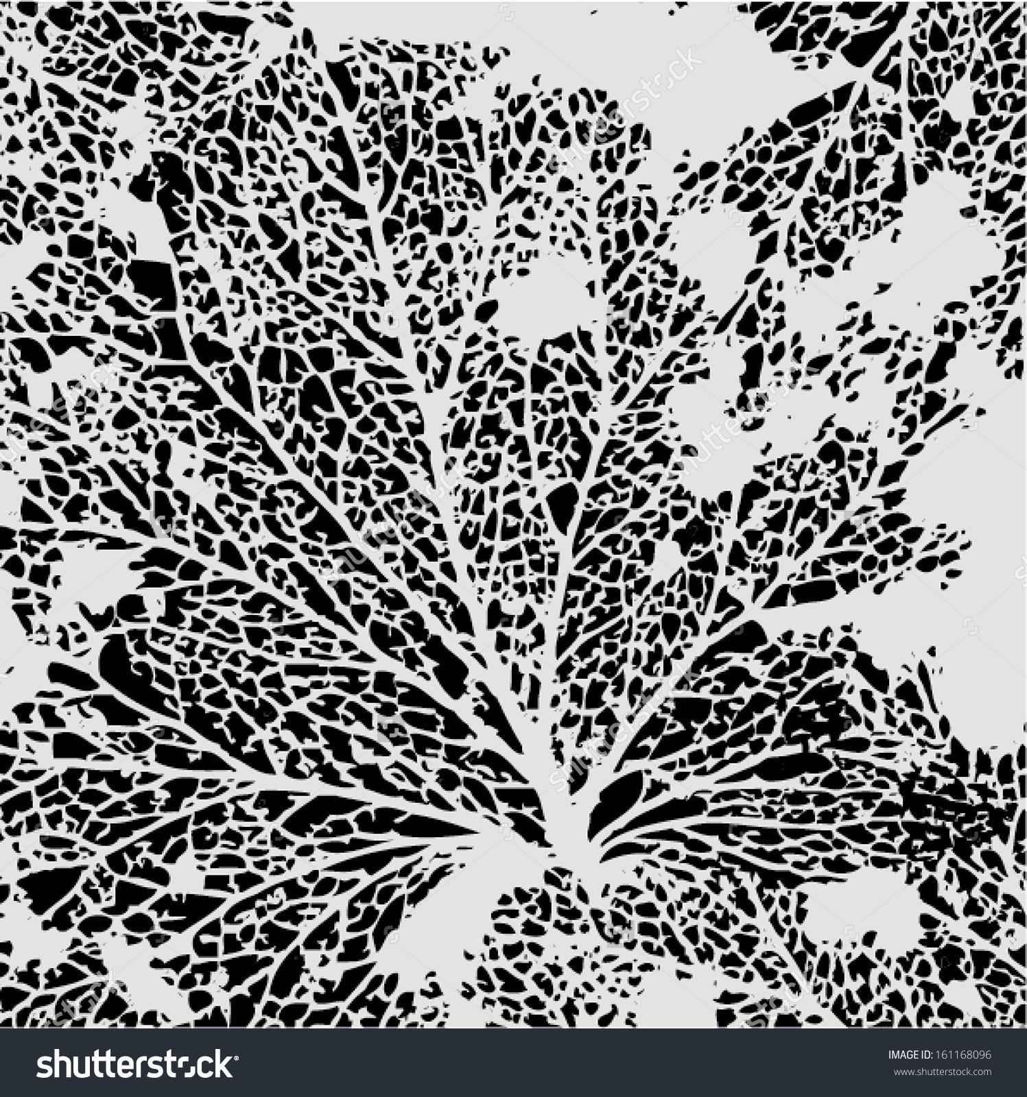 Vector Illustration Leaf Veins Leaf Skeleton Stock Vector.