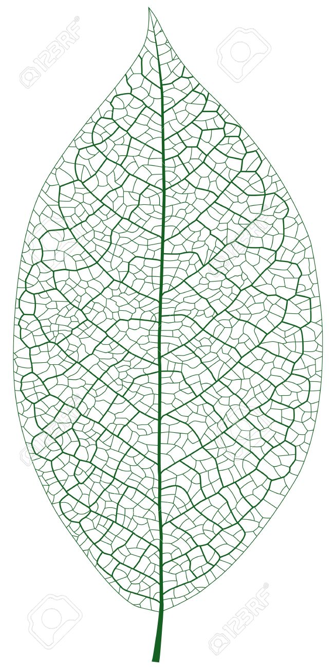 Layered Illustration Of Leaf Vein Royalty Free Cliparts, Vectors.