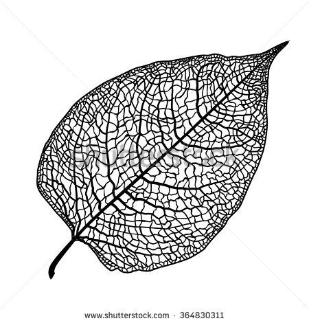 Leaf Vein Lizenzfreie Bilder und Vektorgrafiken kaufen.
