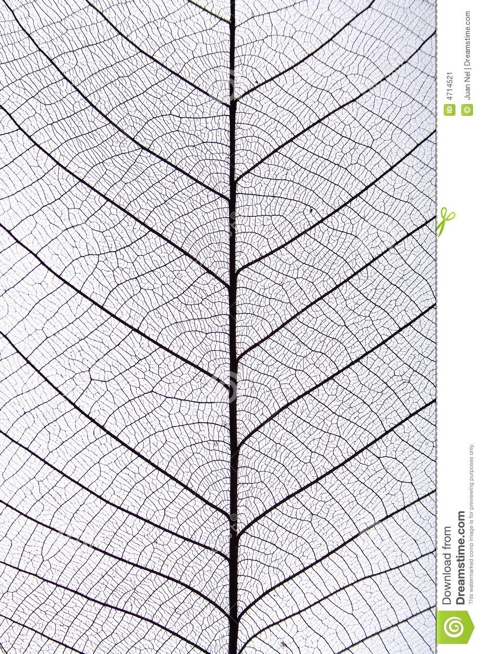 Black Leaf Vein Pattern Stock Image.