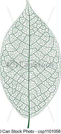 Vector of Leaf Vein.