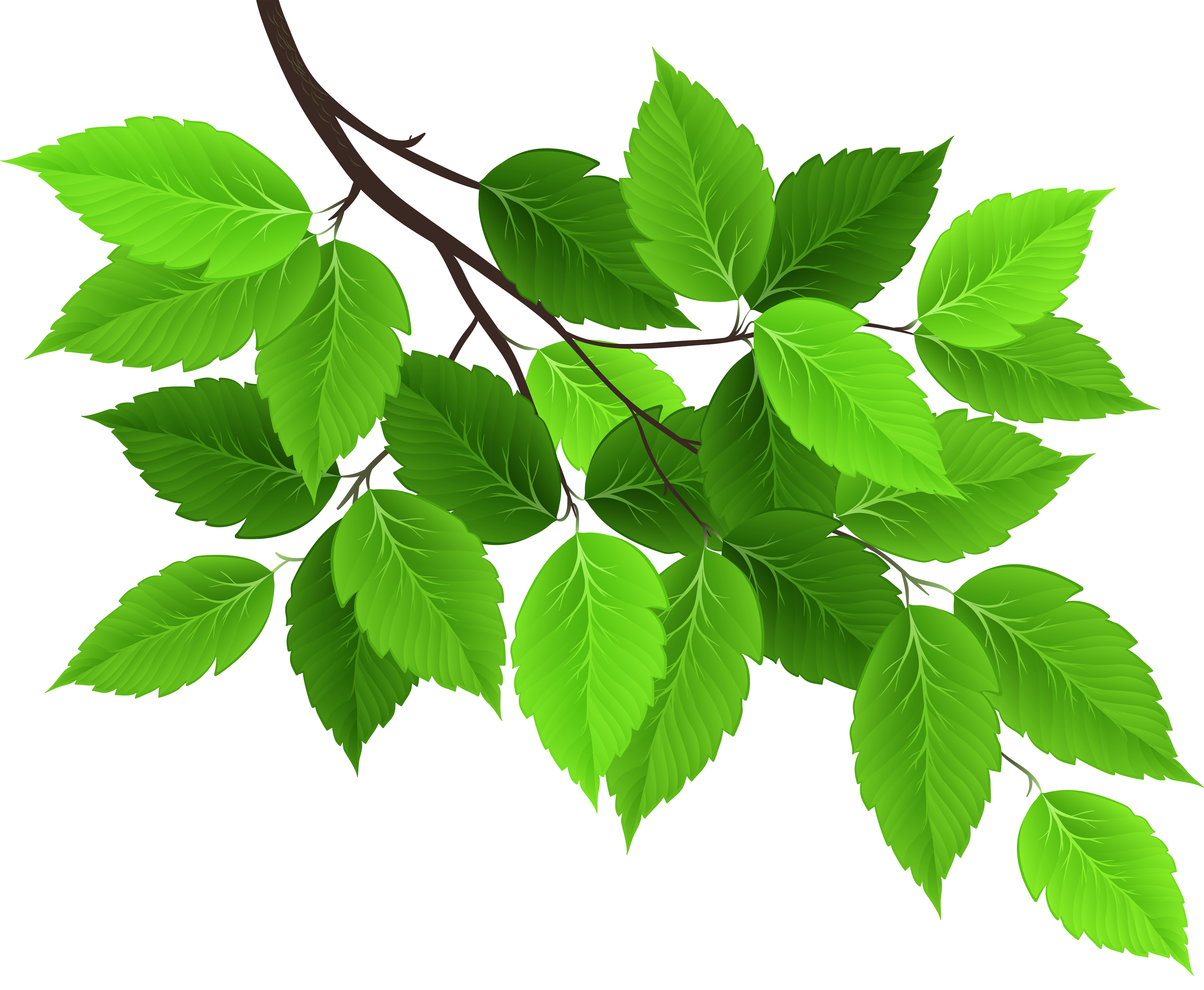Branch with Green Leaves PNG Clip Art Image.