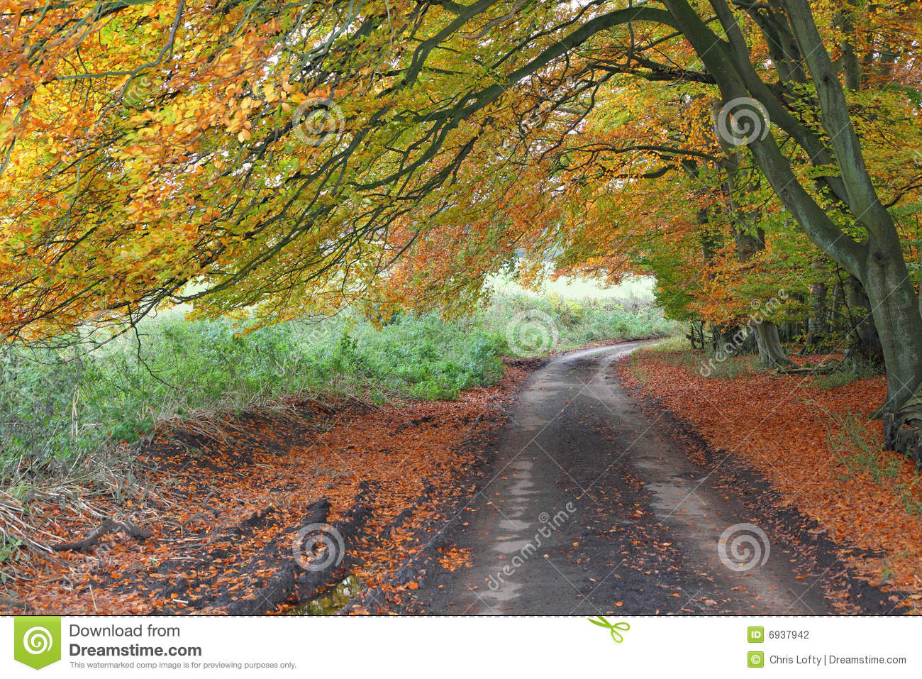 Autumn Down An English Leafy Lane Stock Photography.