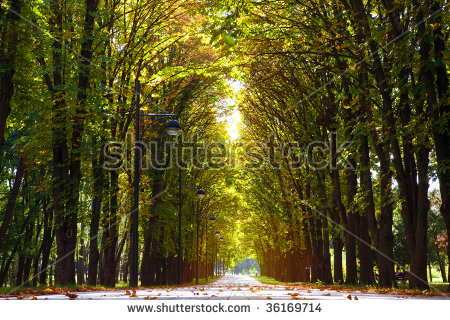 Leafy Lane Stock Photos, Royalty.