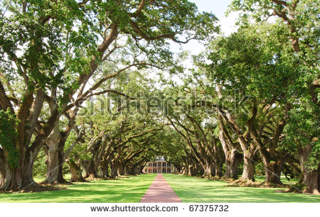 Plantation House Stock Photos, Royalty.