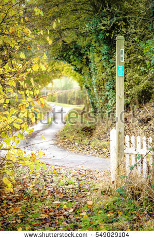 Leafy Lane Stock Images, Royalty.