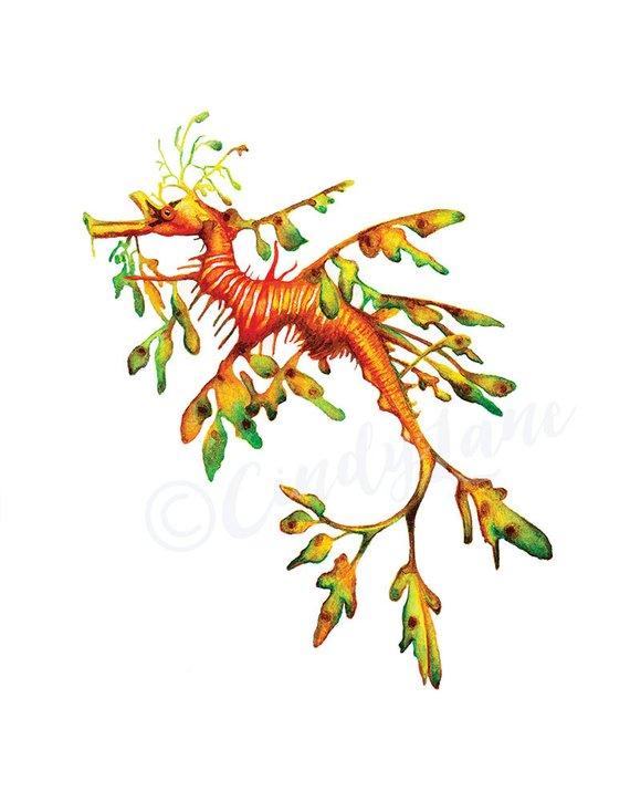 Leafy Sea Dragon Watercolor Printable Art, Seahorse.