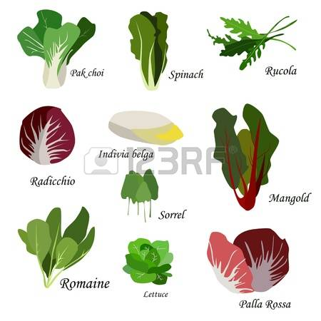 611 Leafy Vegetables Stock Vector Illustration And Royalty Free.