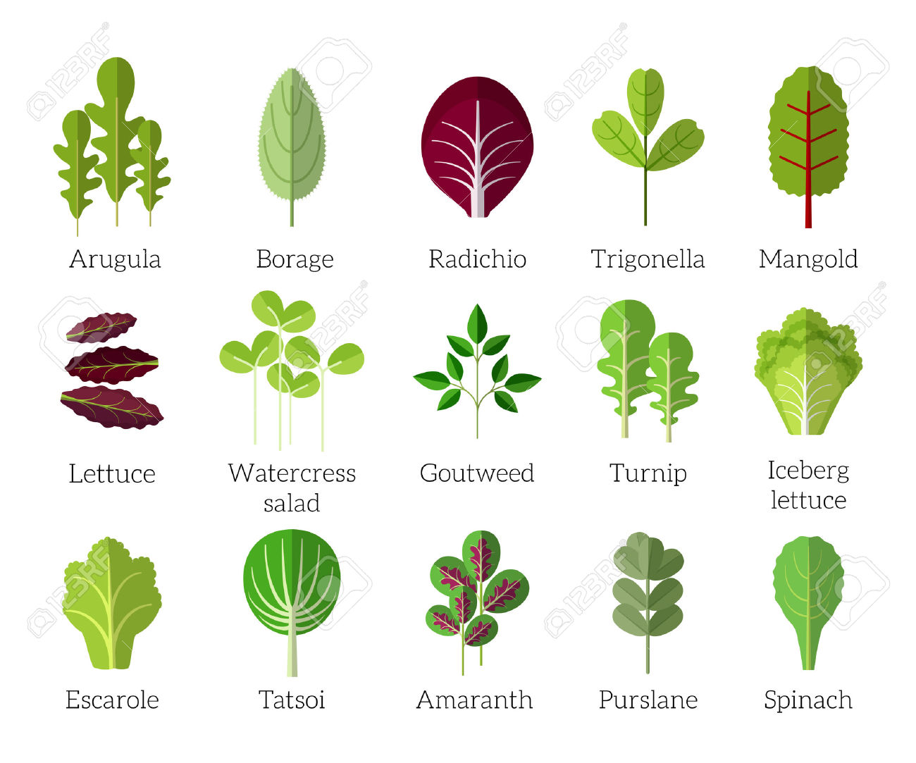 Salad Ingredients. Leafy Vegetables Vector Flat Icons Set. Organic.