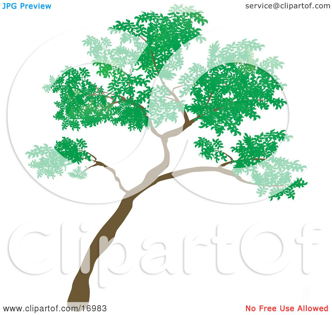 Big Green Tree Leaning to the Right Clipart Illustration by.