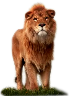 Leao png » PNG Image.
