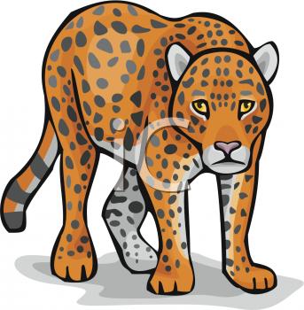 Leopard Clipart Pictures.