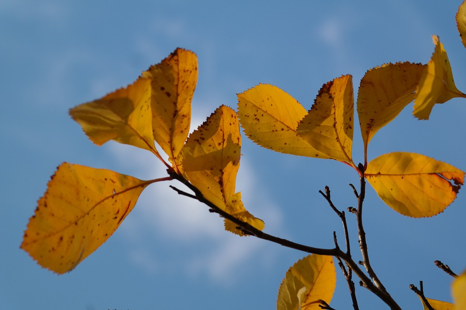 Free photo Coloring Autumn Leaves Yellow Fall Foliage.
