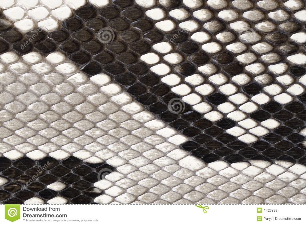 Free Snake Skin Clipart.