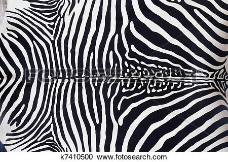 Stock Photography of Zebra leather skin texture painted k7410500.