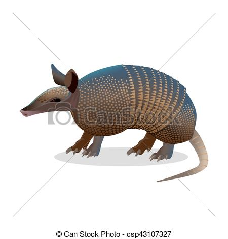 Vector Illustration of Armadillo isolated. Realistic placental.