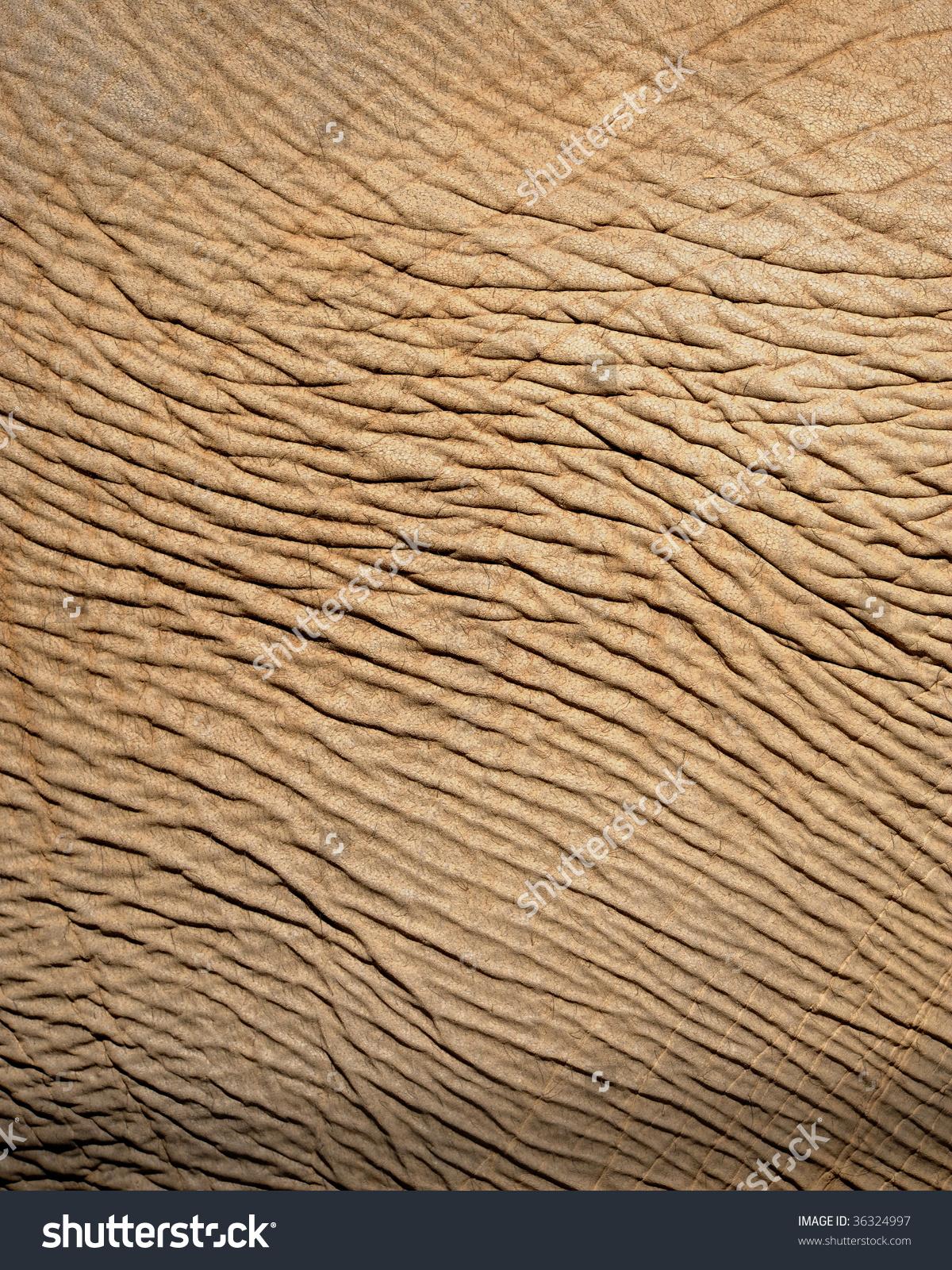 Close Asian Elephant Skin Showing Wrinkles Stock Photo 36324997.