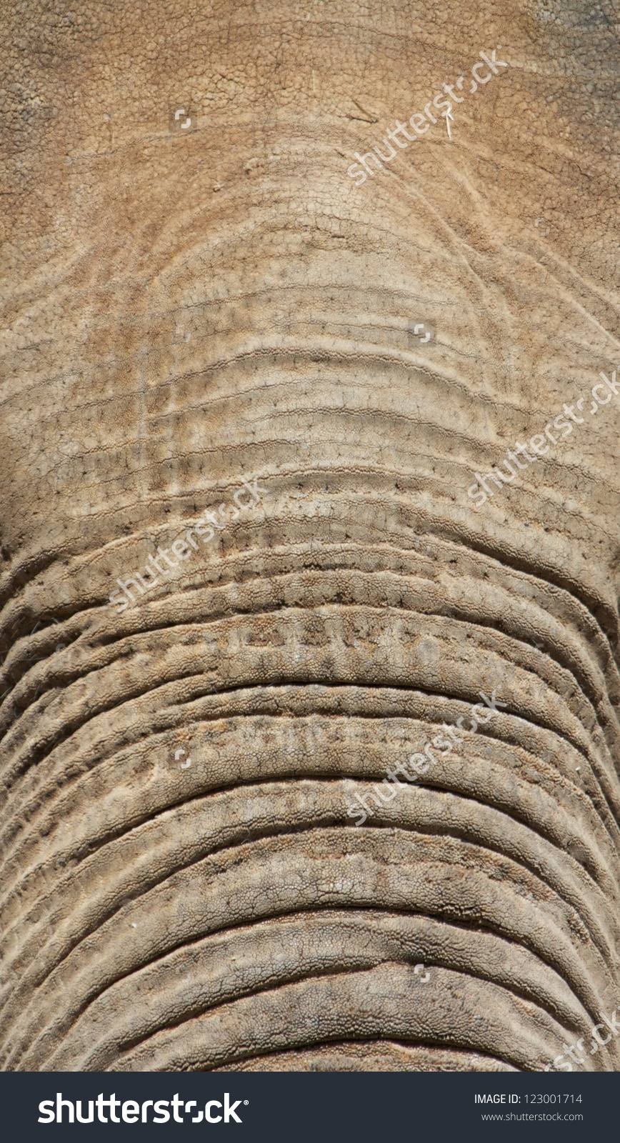 Closeup Shot Of An Asian Elephant'S Forehead With Its Thick.