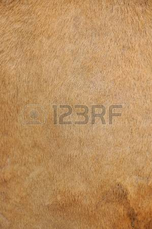 345 Leathery Stock Illustrations, Cliparts And Royalty Free.