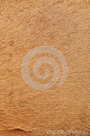 Camel's Skin Stock Image.