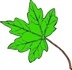 Maple Leaves Clip Art.